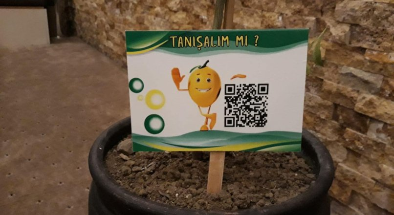 Qr-Code Talking Tree Project How?